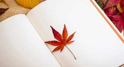 Maple leafy lying on open book