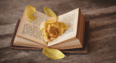open book with petals scattered across it.