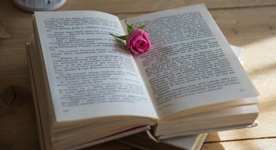 Open book with pink rose lying in the middle.